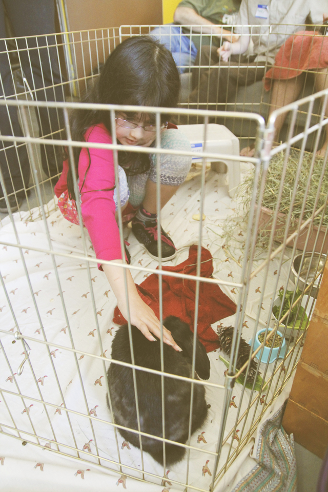 My oldest daughter loved Charlie the bunny so much she spent most of the allotted time in the cage with him. And Charlie loved her. At the end of the visit, he kinda of lay down and stretched out which elicited some oohs and aahs from some of the bunny people. Apparently in bunny-speak, it means I trust and like you.